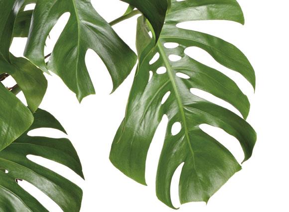 Arzte Exklusiv Pflanzen Fur Korper Und Geist